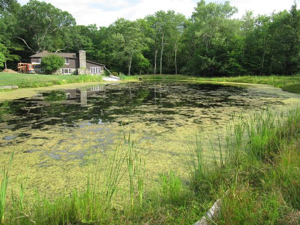 The pond and lake connection problem ponds lakes for Pond problems