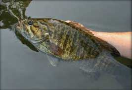 bass-small