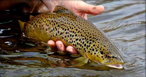Fish Stocking -